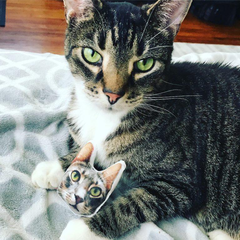 Updates + Kittydelphia!